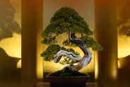 bonsai da interno